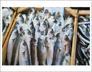 Parker Solutions for the Seafood Industry
